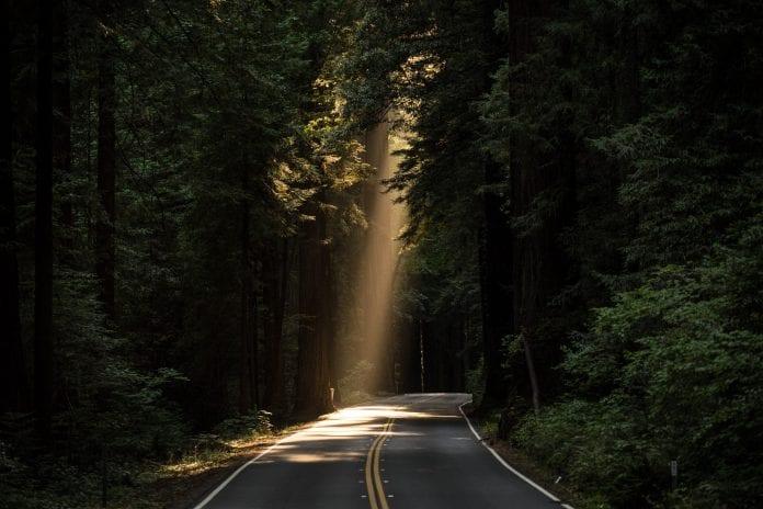 kelias vingiuoja nušviestas saulės