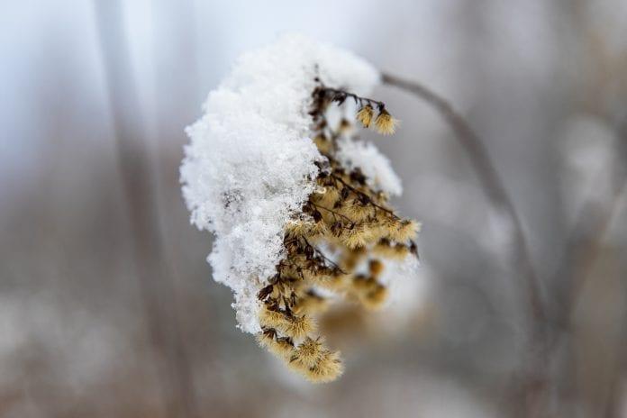 Sniego paklotė miške