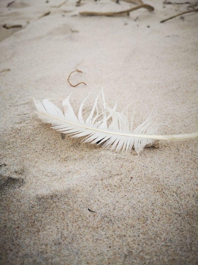 plunksna ant smėlio
