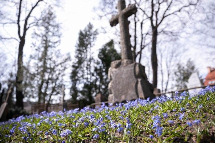 Pavasariniai žiedai Bernardinų kapinėse Vilniuje